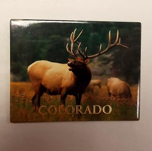 Colorado Elk Magnet
