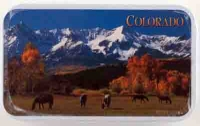 Colorado Horse Mint Tin