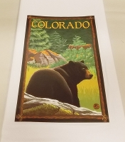 Colorado Bear Kitchen Towel