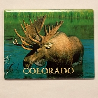 Colorado Moose Magnet