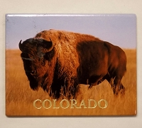 Colorado Buffalo Magnet